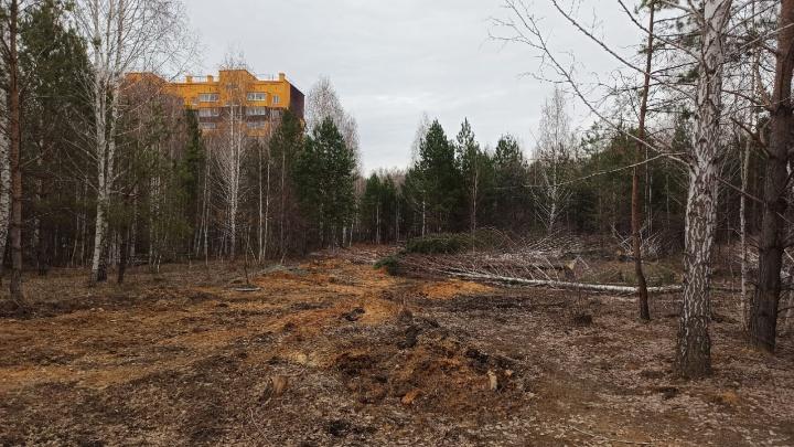 В челябинской мэрии опровергли связь между вырубкой деревьев в «Парковом» и строительством детсада