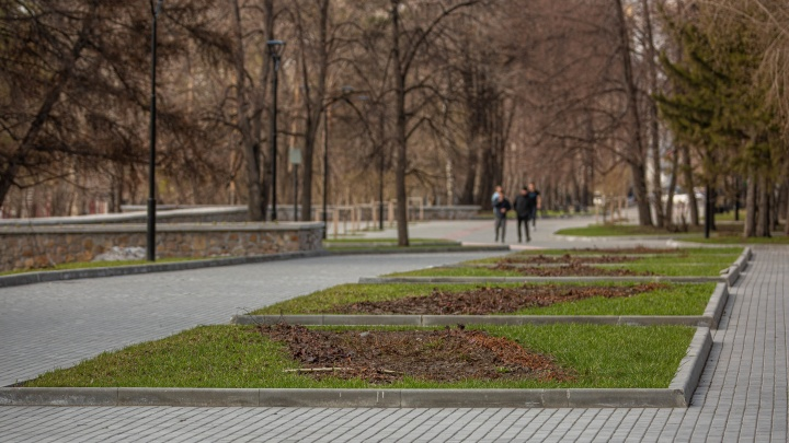 В Новосибирске 48 парков и скверов обработают от клещей: показываем места на карте