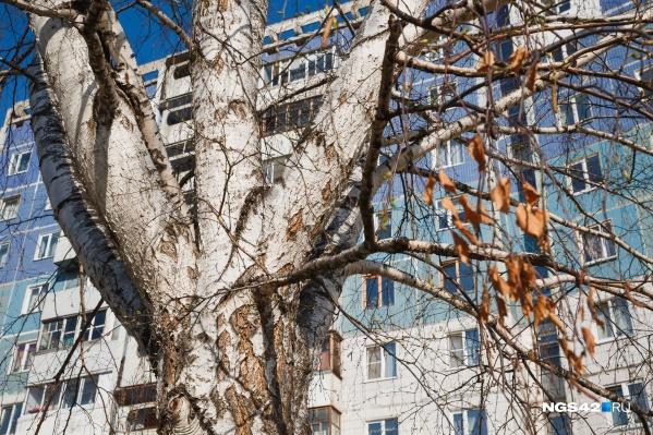 Как рассказали в мэрии,план вырубки деревьев корректируется в текущем режиме исходя из поступающих в администрацию города заявок и обращений