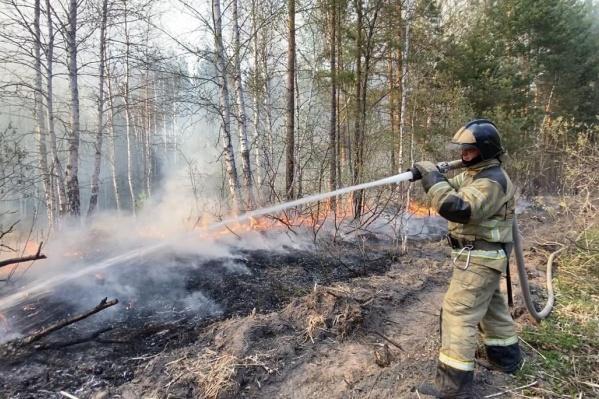 Лесной пожар на Червишевском тракте до сих пор тушат