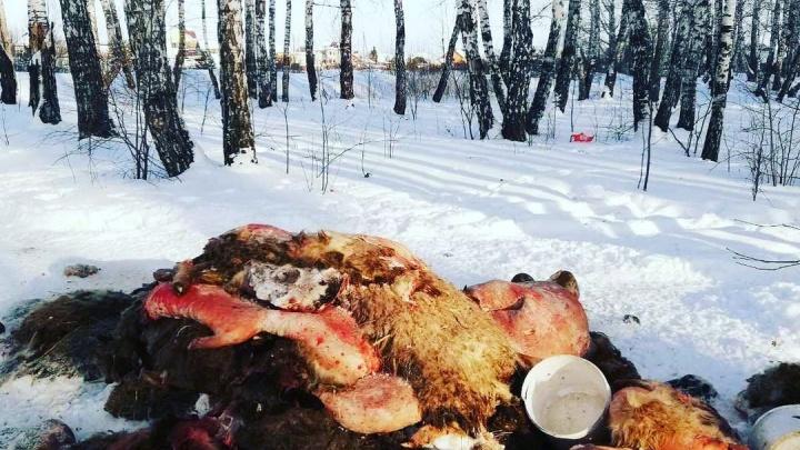 Тюменцы нашли страшную свалку шкур и останков животных в Комарово