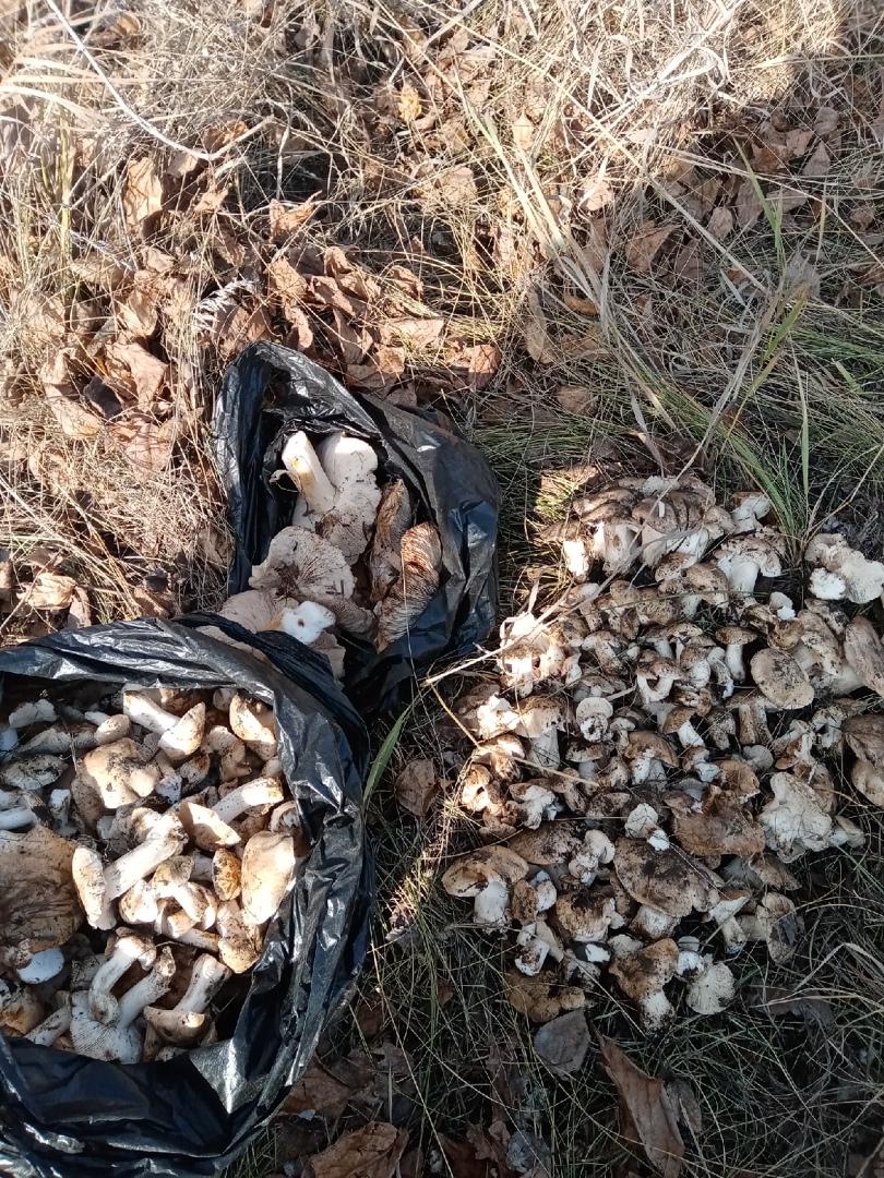 Грибочки из леса у Искитима