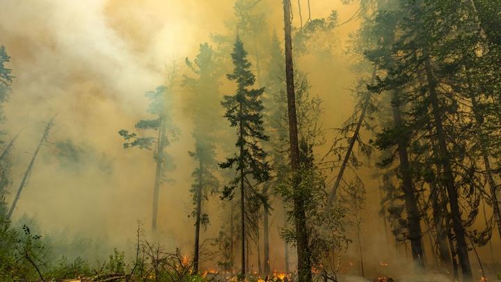 Площадь лесных пожаров в России за сутки утроилась за счет Красноярского края