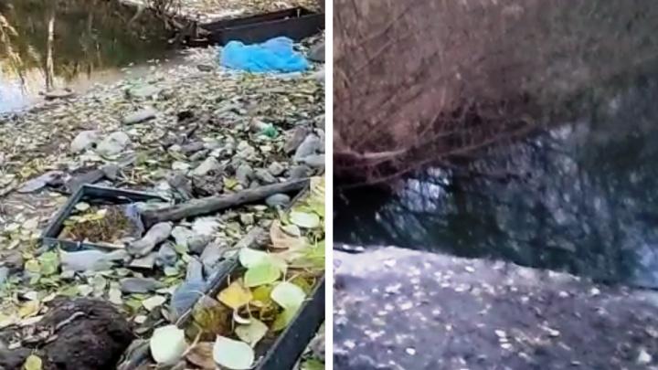 «Мы вытащили кучи мусора»: новосибирцы вышли на уборку реки Каменка, не дождавшись реакции властей