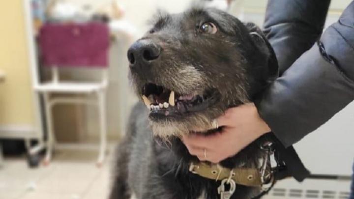 «Возможно, хозяева в больнице». Екатеринбурженка спасла собаку, которую оставили на морозе без еды и воды