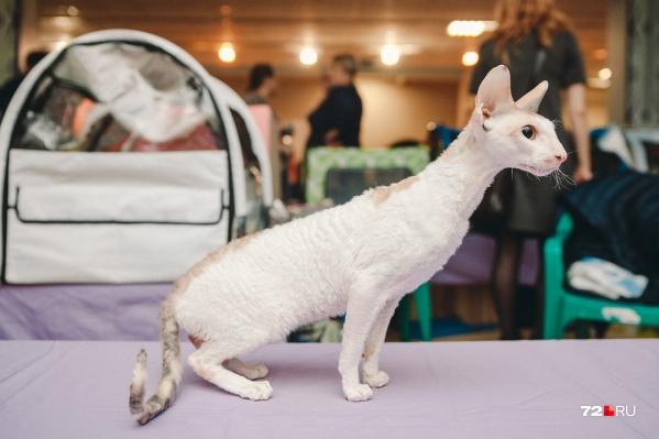 """Выставка-конкурс собрала около <nobr class=""""_"""">120 животных</nobr> самых разных пород и стоимости. Некоторые породы были всего в одном экземпляре<br>"""