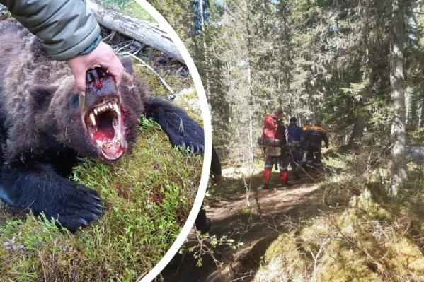 Медведь пытался напасть даже на госинспекторов с оружием