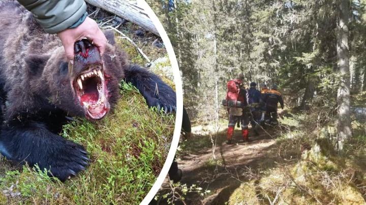 Один на один с людоедом: кем работал в тайге 16-летний подросток и как он попал в лапы медведю