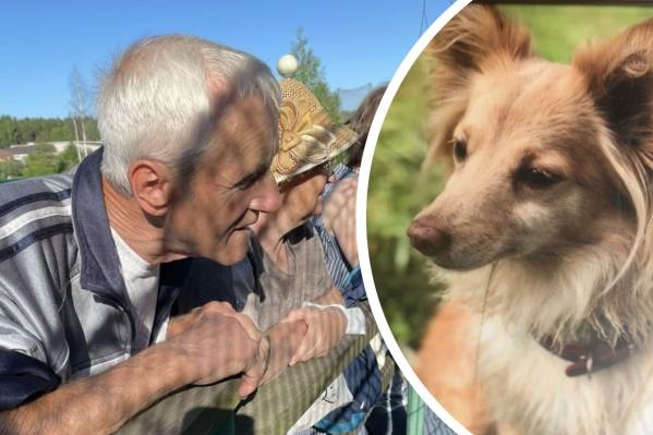 Владимир Носков вышел на прогулку с собачкой Тосей и пропал