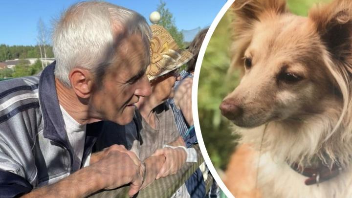 Ушел гулять с собакой и не вернулся: в Ярославле третий день ищут дедушку и пса Тосю