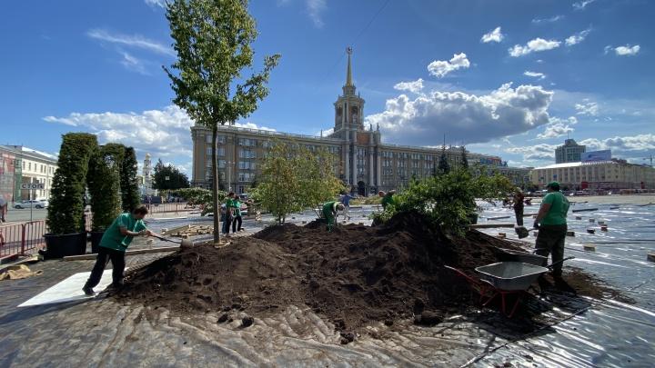 Что будет с площадью после фестиваля и куда потом денут деревья? Показываем, как в центре города вырастает сад