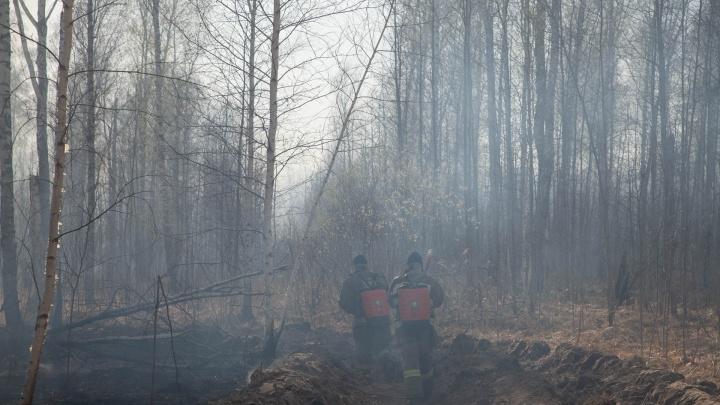 Федеральный прокурор остался недоволен работой тюменских властей при тушении лесных пожаров