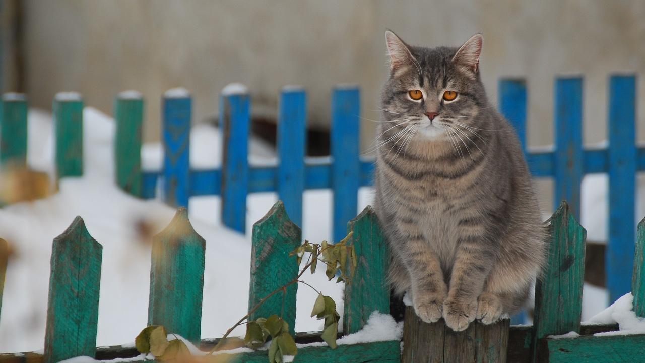 «Вот так и живем», — подытожил мой визит серый кот, явно готовый для проживания в прохладных октябрьских реалиях