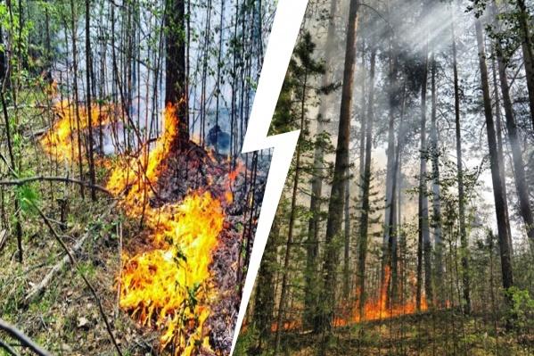 Пламя повредило в лесу как сухостой, так и молодняк