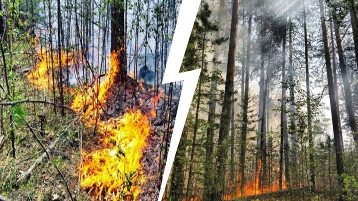 Пожар, спаливший лес в Челябинской области на десятки миллионов рублей, обернулся уголовным делом
