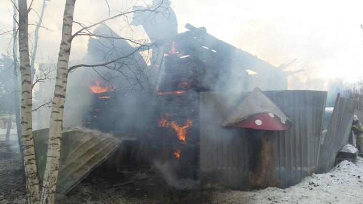 В питомнике под Екатеринбургом, где живут полсотни собак, случился пожар