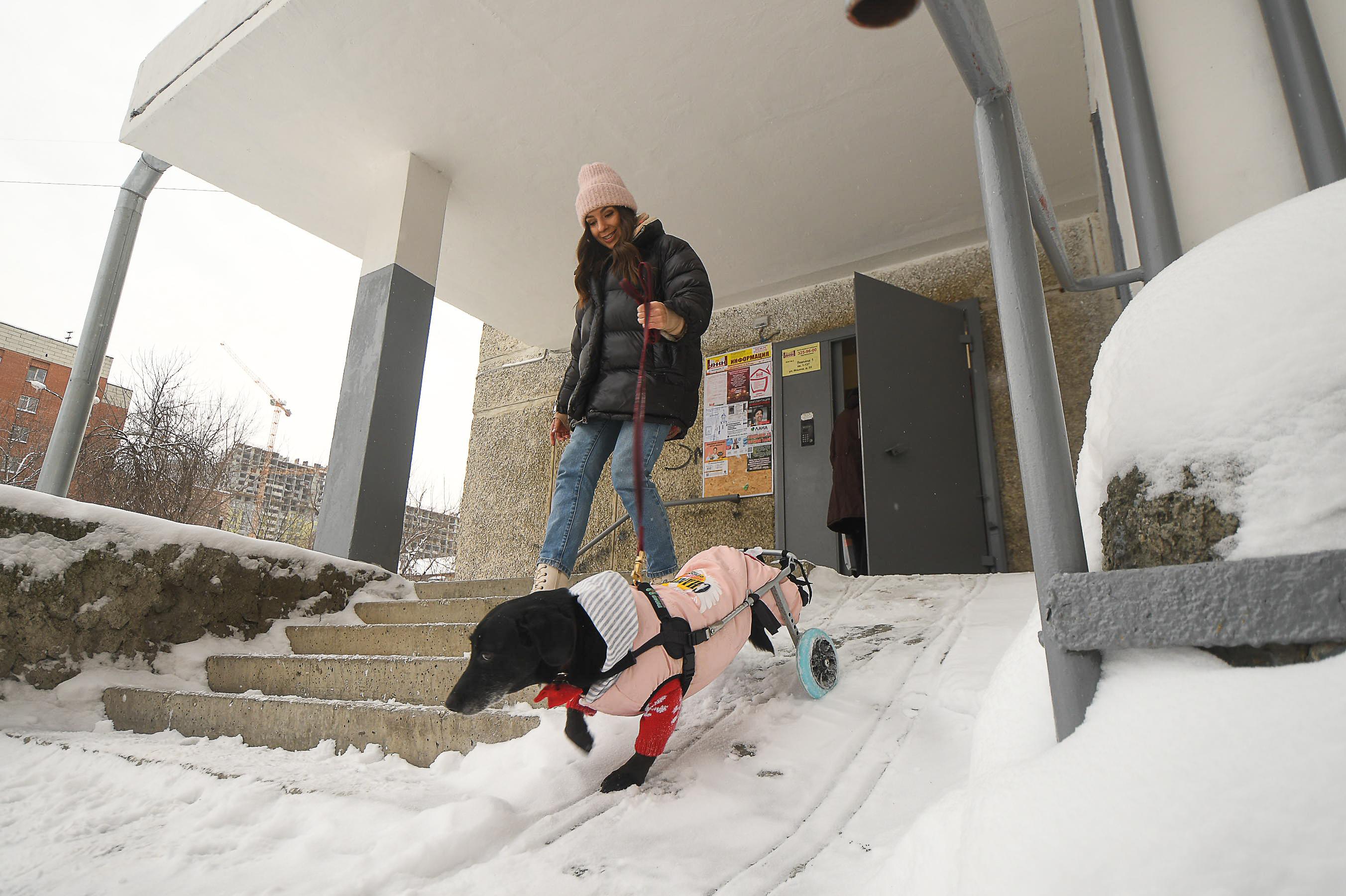 Милка любит бегать по снегу