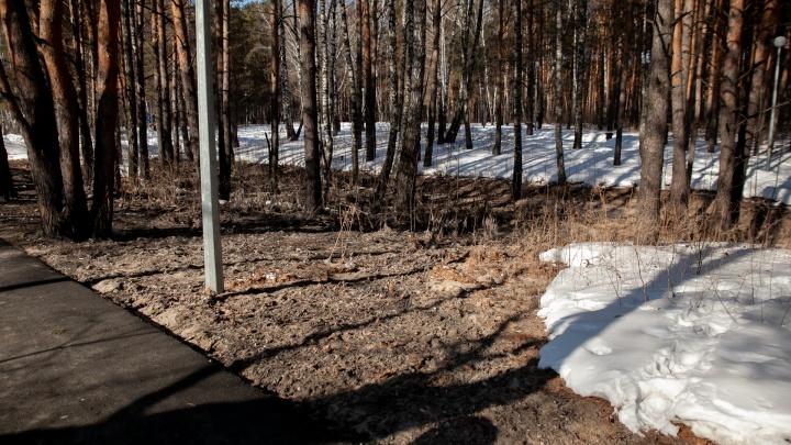 Почти 300 млн рублей потребуется на устранение последствий аварии в Гилёвской роще