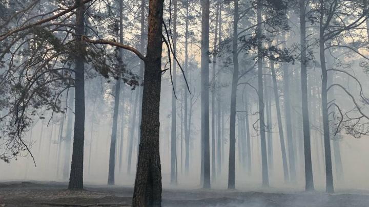 Тюменцы сняли, как дикие животные бегут из леса — так они спасаются от огня
