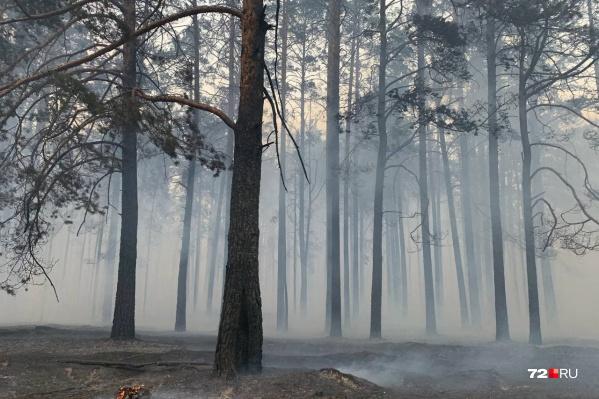 Лесные пожары уничтожают гектар за гектаром, лишая животных дома