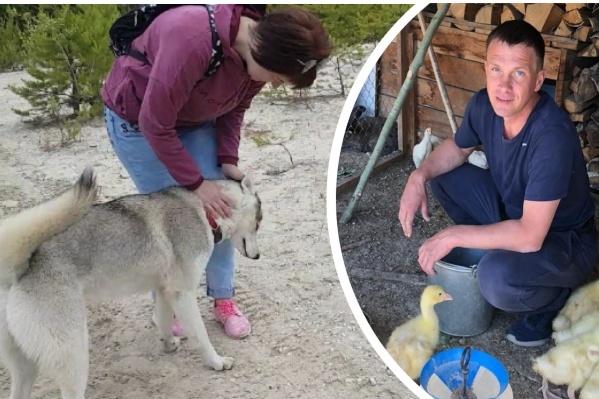 Бизнесмен Олег Потапов убил собаку прошлым летом, расследование дела продолжается до сих пор