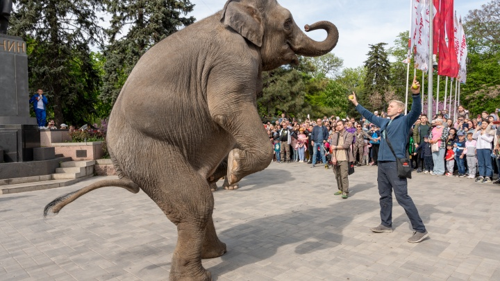 По городу слона водили: фоторепортаж из центра Ростова