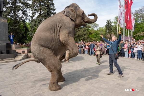 Слоны радовали ростовчан не только компанией, но и трюками