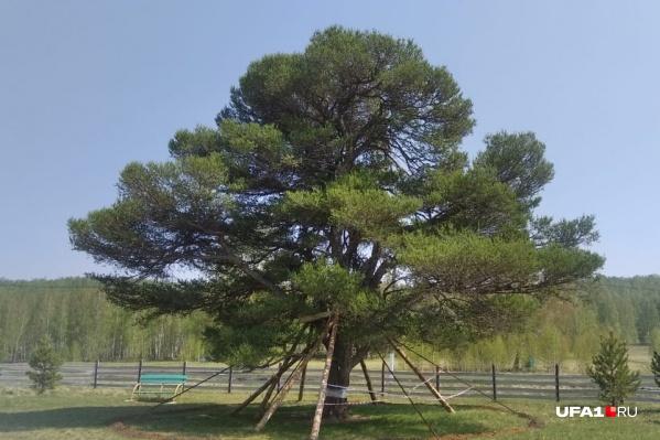 Сейчас деревья выглядят так