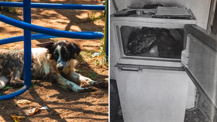 В Самарской области мужчина убил собаку на глазах детей, чтобы вылечиться от болезни легких