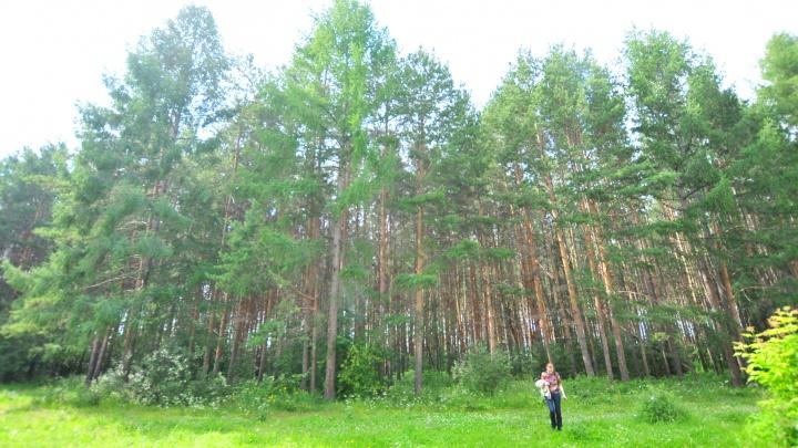 В Свердловской области ищут восьмерых человек, потерявшихся в лесах