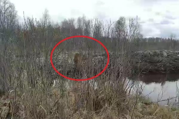На фото собака, которая не выпускала из виду рыбака. Она лаяла и не давала уйти человеку