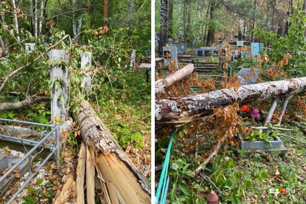 Уктусское кладбище завалено сломанными деревьями