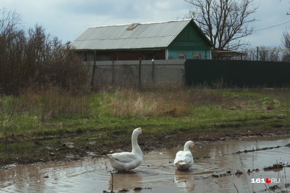 Это — не бассейн для гусей, а проезжая часть