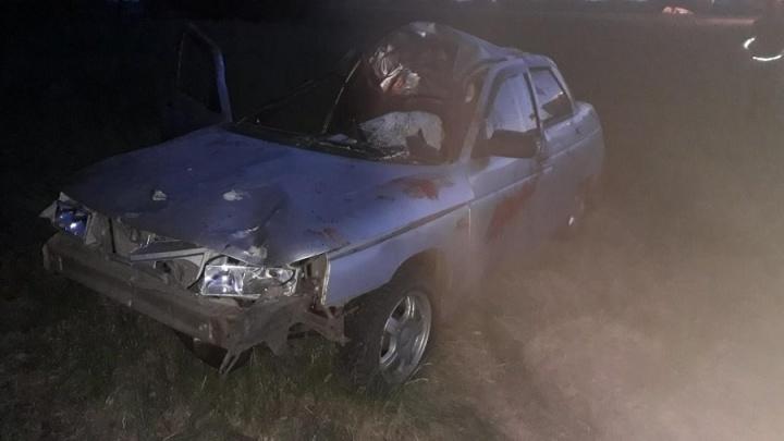 В Курганской области на трассе легковушка сбила лося, пострадали 2 человека