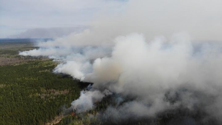 Самый крупный пожар Тюменской области ликвидировали. Что происходит в Новом Тапе сейчас?