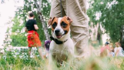 Международный день собак: фоторепортаж о песиках с улиц Омска