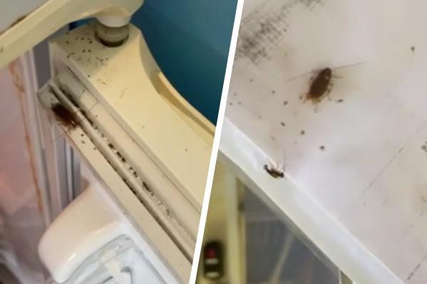Тараканы бегают по документам, стенам, полу, холодильникам и рабочим поверхностям