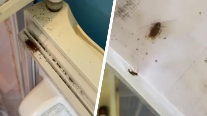 В свердловском детсаду кухню заполонили тараканы. Видео