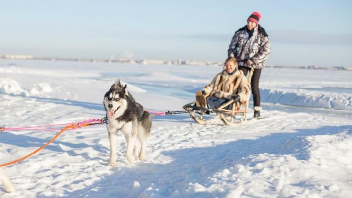 Кёрлинг, прорубь и поездки на собачьих упряжках: идеи, как отметить корпоратив на свежем воздухе