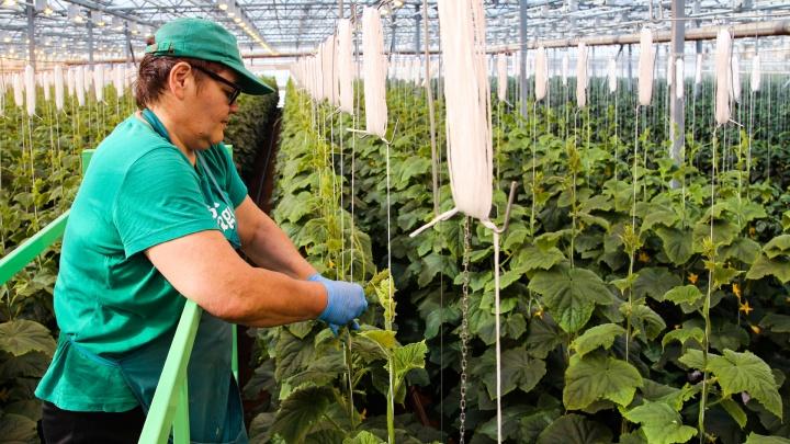 Совхоз «имени Рахимова»: как знаменитое агропредприятие под Уфой набрало многомиллионные долги