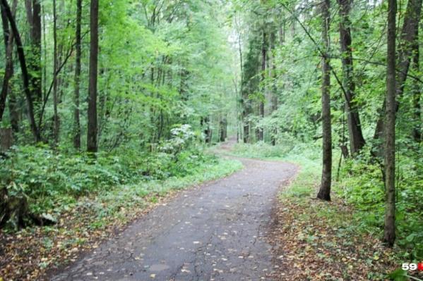 Обустройство леса пройдет в рамках проекта «Зеленое кольцо»