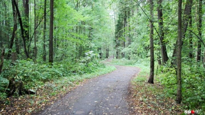 Мостики, места отдыха и велодорожки: в Перми обсудили благоустройство Черняевского леса