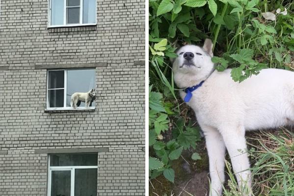 Собака выбралась на улицу через дырку в сетке