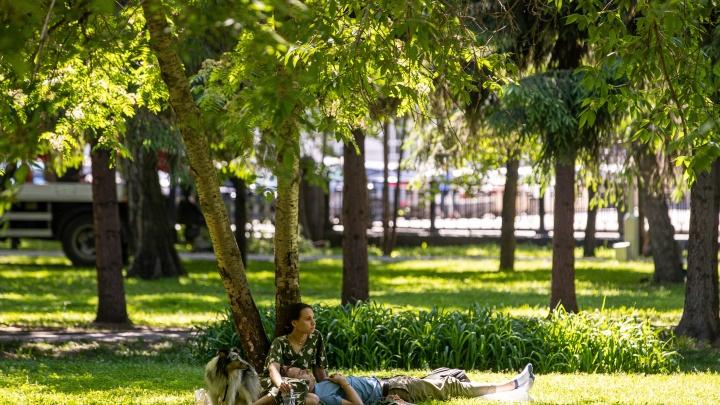 К Новосибирской области подходит обширный антициклон — он несет жару до +31 градуса