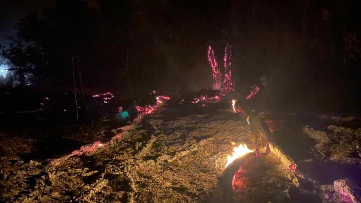 «Виновата природа»: в Волгоградской области вторые сутки тушат крупный лесной пожар