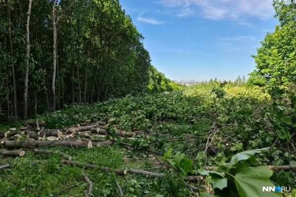 На участке рядом с Щёлоковским хутором вырубили деревья для строительства ЖК