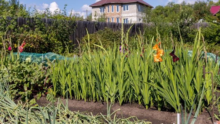 В Красноярске начала работать правовая школа для садоводов