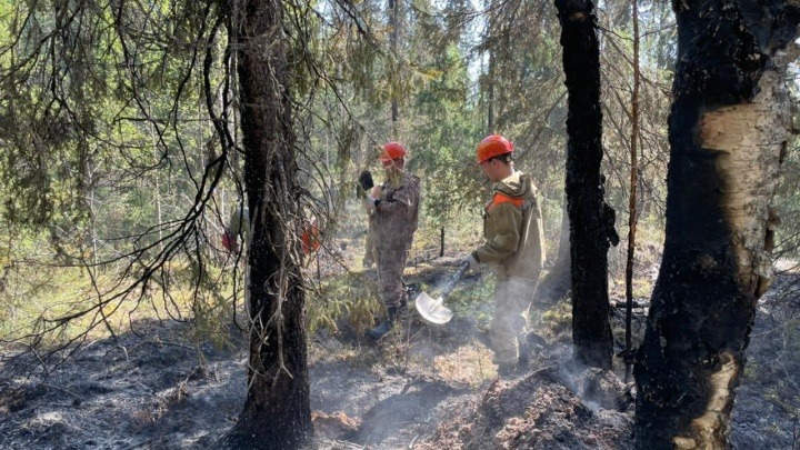 В Архангельской области снова запретили ходить в леса из-за возможности пожаров