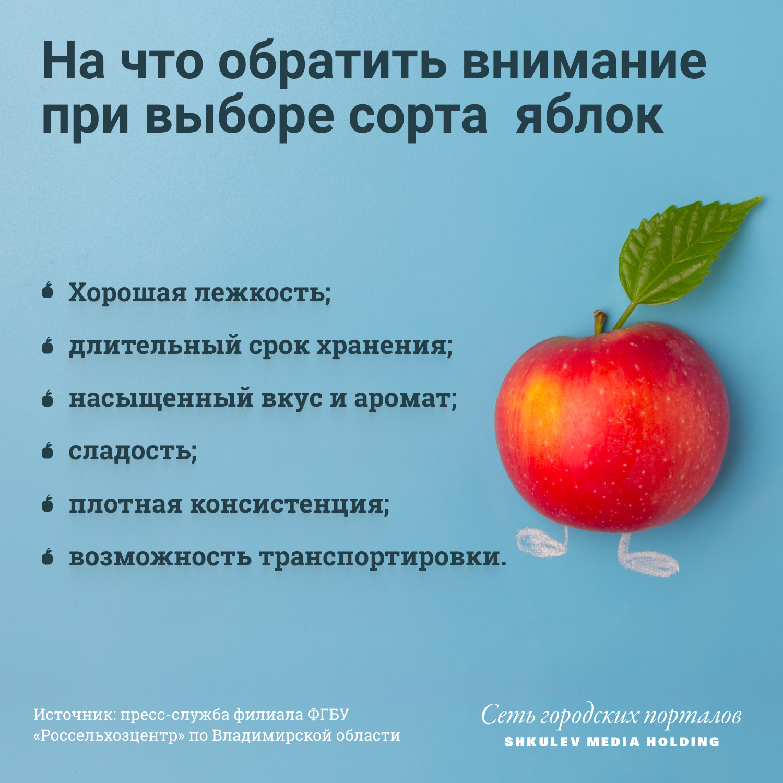 Как выбрать качественные сорта яблок