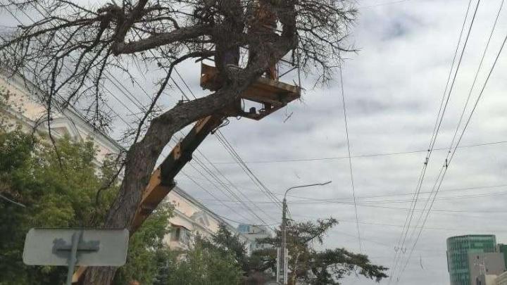 В мэрии начали внутреннюю проверку после уничтожения векового дерева в центре Челябинска